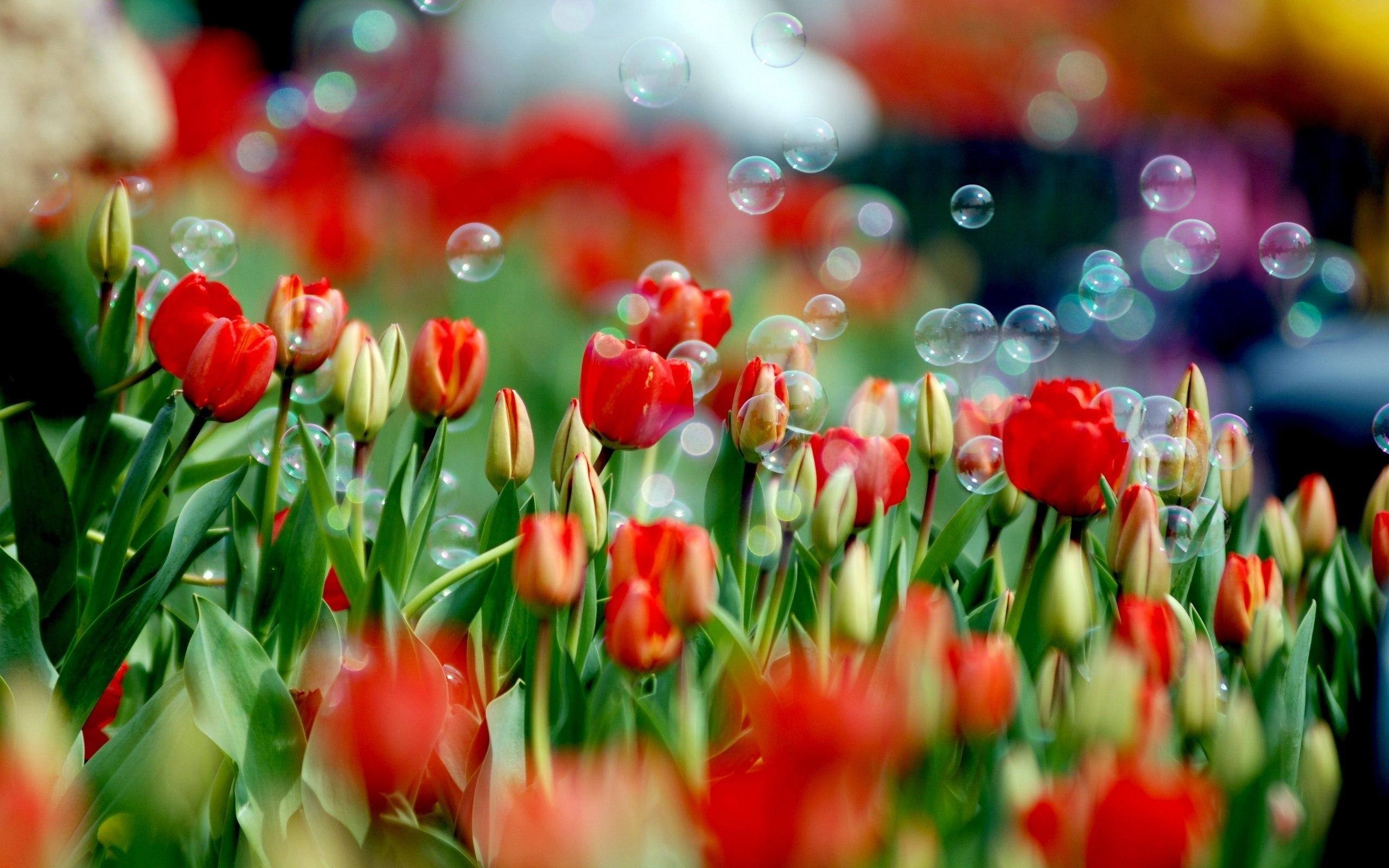 Дорогие цветы на 8 марта цветы на заказ новые черемушки