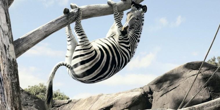 Картинки по запросу берлинский зоопарк