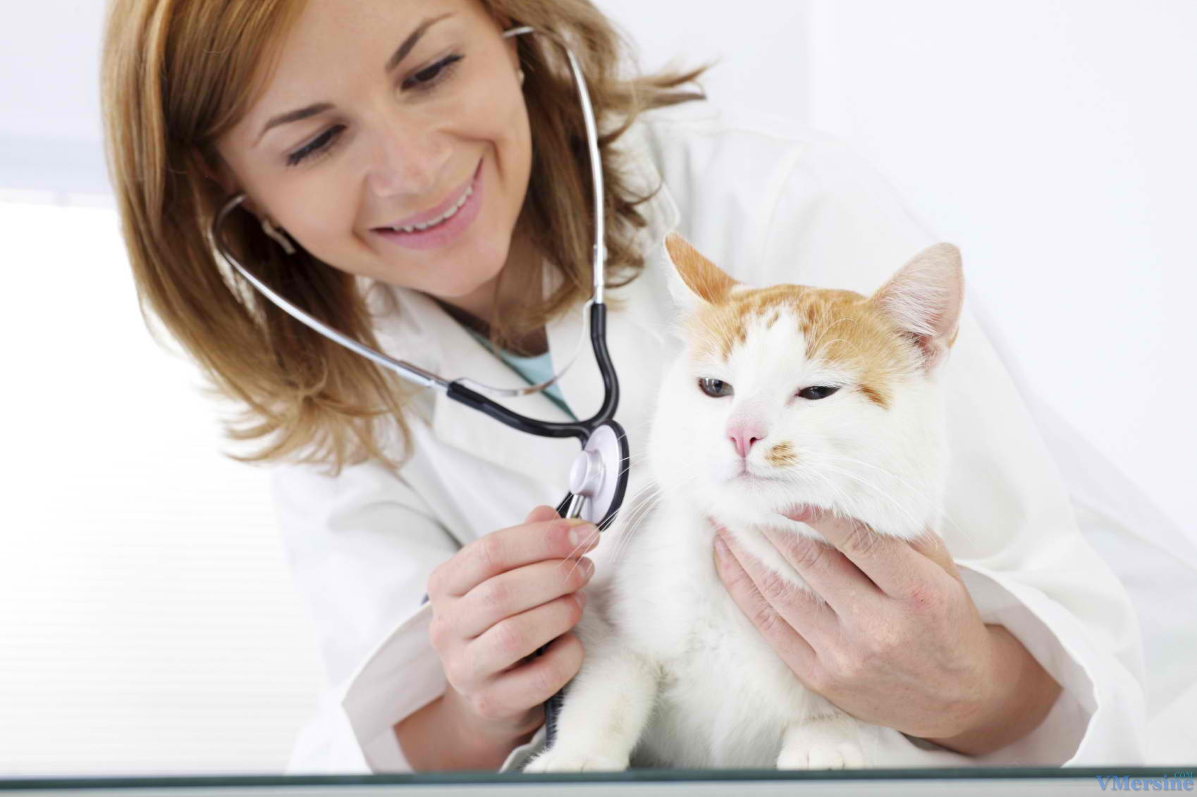 как помочь коту с признаками аллергии