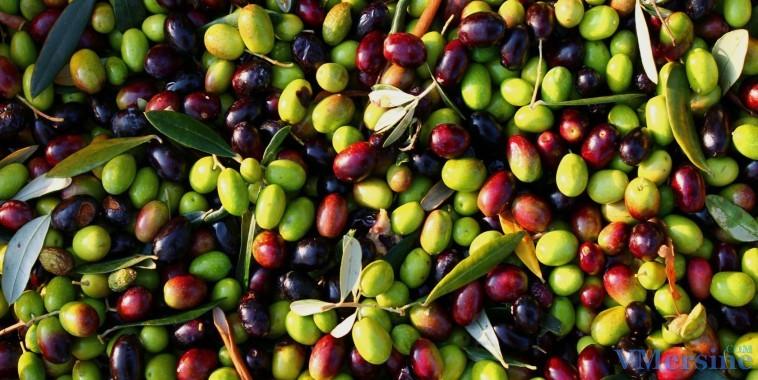 Картинки по запросу оливки
